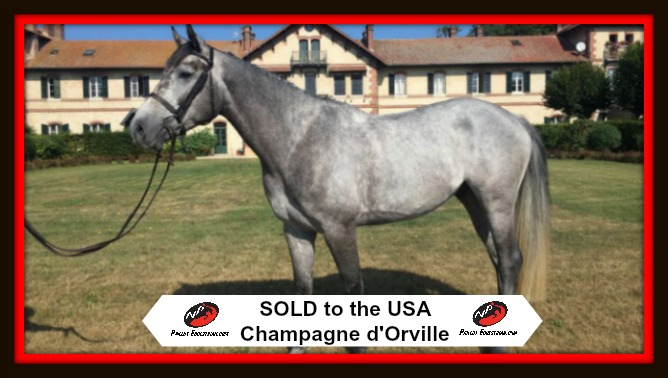 SOLD: Champagne d'Orville