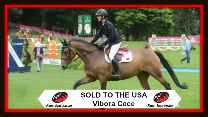 SOLD: Vibora Cece